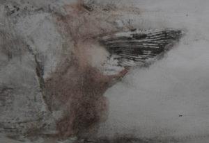 Octopus Detail (Fin) by Eamon Colman